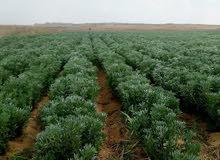 للبيع قطعه ارض زراعيه واستثماريه متكامله الخدمات