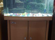 حوض سمك مع ميز جاهز للبيع