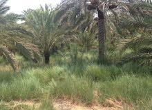 بستان زراعي البصرة ابي الخصيب نهر خوز