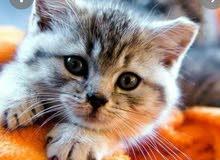 chat bebe jaune