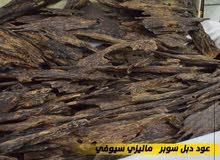 عود البخور المفضل لدى العرب عود دبل سوبر ماليزي سيوفي