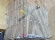متوفر قفص طيور حب بسعر مناسب