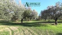 ارض زراعية مميزة للبيع في الصبيحي (اراضي السلط ) مساحة الارض 10900 م
