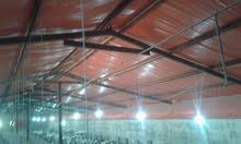 مزرعة دواجن للبيع - السخنة