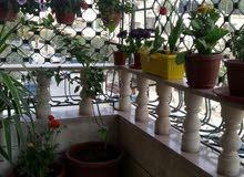 للبيع شقه طابق اول في الزرقاء الجديده قرب مسجد سعيد بن الجبير