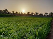 انا للمالك مزرعه قائمه في بركا النعمان قريب محطه شل