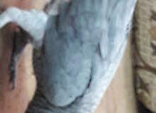 الزرقاء حي رمزي الحاووز