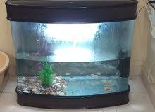 حوض سمك مع سمك واكسجين