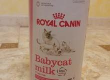 حليب قطط royal canin