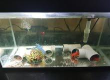 حوض لابستور  crayfish aquarium tank