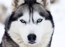 اكل كلاب مبرد فقط ب 20 قرش الكيلو