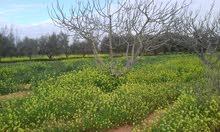 للايجار مزرعة 8هكتار بها2ابار مياه حلوه - الطلحية باالقرب من محطة الوقود