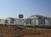 بيوت وصالات زراعية محمية متعددة الصوب