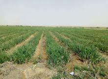 لافضل استثمار زراعى بموقع مميز بالقرب من القرى والمدارس والاسواق