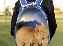 back bag for cats and puppy