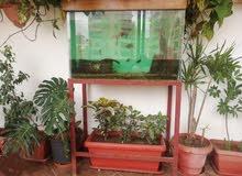 حوض سمك كبير للبيع
