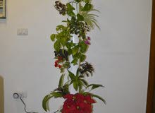 hydroponic system_tower garden