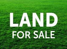 قطعة أرض مميزة للبيع في سالم شاكر الجنوبي