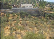 مزرعة 10200م على طريق عمان جرش