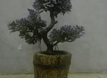 شجرة دمية الحجم لا كبير ولا صغير