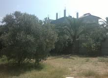 536 متر للبيع في دير البلح عــ 3 شوارع منطقة راقية وسكنية