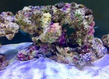 Reef Aquarium Life Rock