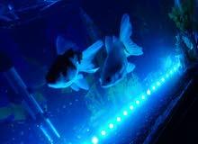 حوض مع سمك
