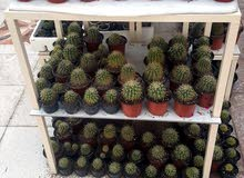 Natural and Artificial Plants for sale