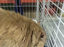 مطلوب قطط للتبني