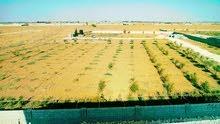 مزارعة للبيع بودريسة