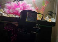 فلتر حوض سمك