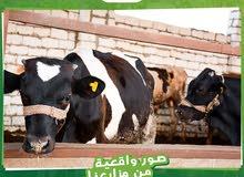 مزارع للبيع داخل كمبوند