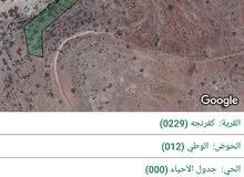 ارض مفروزة حوض الوطي رقم 12 فهيا 80شجرة زيتون رومي 80شجرة زيتون صغير مثمر