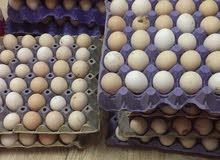 بيض ينفع للاكل او فقاس