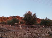 مزرعة في تل الرمان للبيع