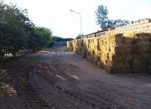 مزرعة إنتاجية مساحتها 27 هكتار في القرضة