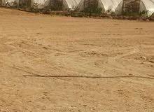 إمتلك مزرعة 5فدان- مصر