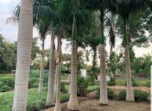 تنسيق الحدائق وزراعة النخيل