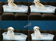 كلاب دلع جميله وباسعار اجمل للبيع