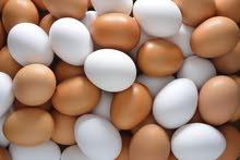مطلوب بيض مخصب