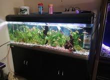 1.5mtr fully set up planted aquarium
