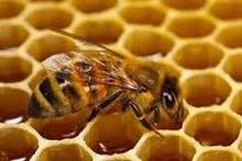 عسل شبواني نقي من مناحل شبوة