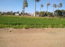 ارض للبيع في حي الجيزة