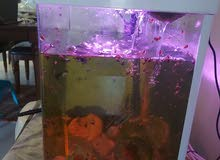 accwariom tank حوض أسماك