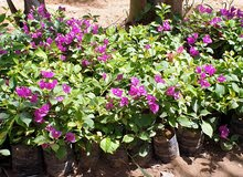 مشاتل توريد وبيع جميع النباتات والنخيل والزهور في جده 0541931012
