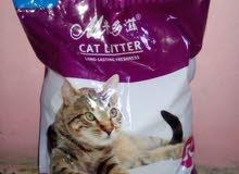 طعام قطط بسعر الجملة