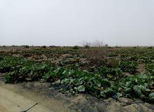 30فدان زراعي واستثماري كامله المرافق 40 من الهرم