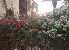 Janzour neighborhood Tripoli city - 375 sqm apartment for rent