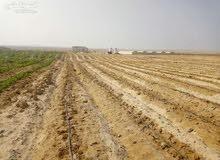مزرعه قريبة من اكتوبر ( الشيخ زايد _ بيفرلى هليز _ حدايق الاهرام واكتوبر )