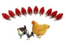 سقايات اتوماتيك للدجاج و الطيور